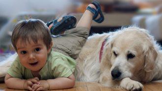 beste hondenras voor kinderen