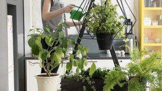 vrouw verzorgt planten
