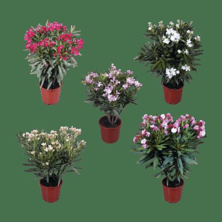 tuinplanten-aldi
