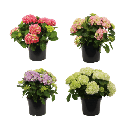 tuinplant-aldi