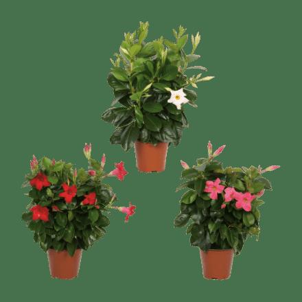 aldi-tuinplant