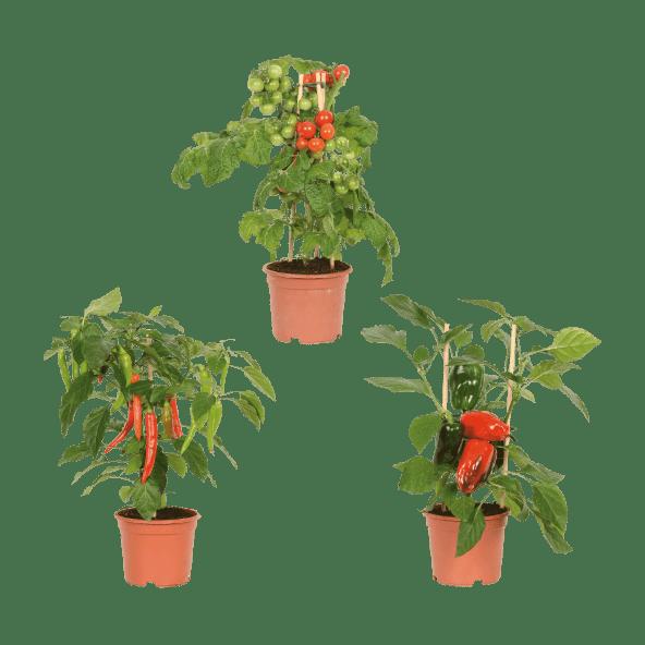 groentenplanten-aldi
