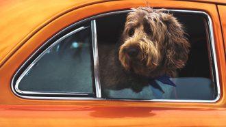 hond-warme-auto