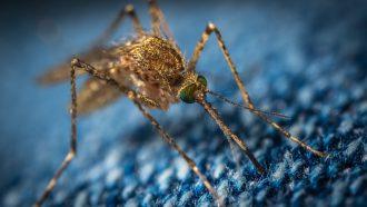 zika-virus-2019-famme.nl