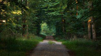 wandelen - lopen - hardlopen - hardloopschema - famme.nl