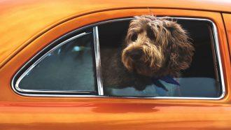 huisdieren - huisdieren op Instagram - kat - poes - hond - viervoeter