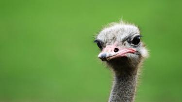 struisvogelsyndroom