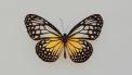 vlinderziekte