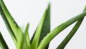 planten-lucht-zuiveren